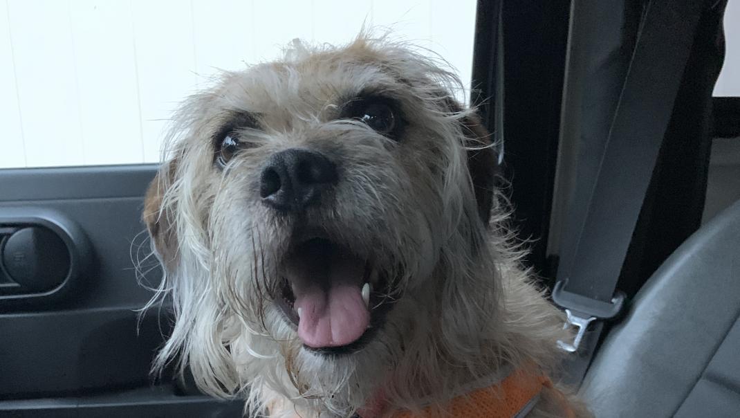 Peach on a car seat